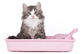 Kitten sitting in a pink litter box