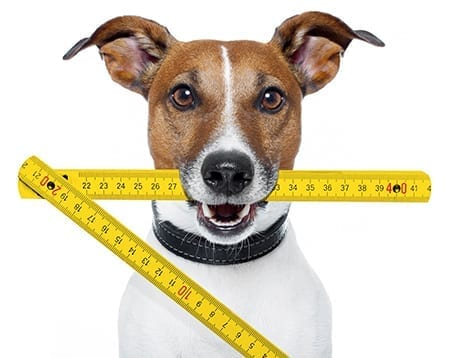 Dog With Measuring Stick