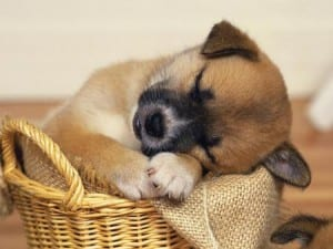 Best Ways To Make Your Dog S Bed Better