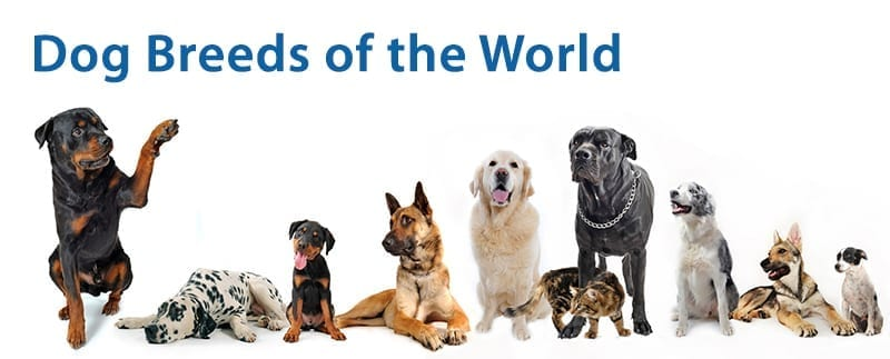 All Dogs In The World ...