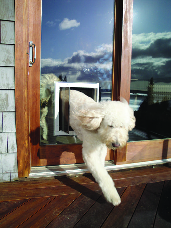Pet Door Through Glass