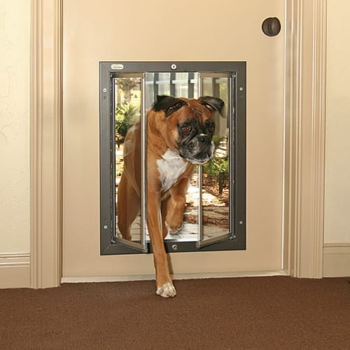 Most Chinese Crested require a medium PlexiDor dog door, but small individuals can get by with a small PlexiDor dog door