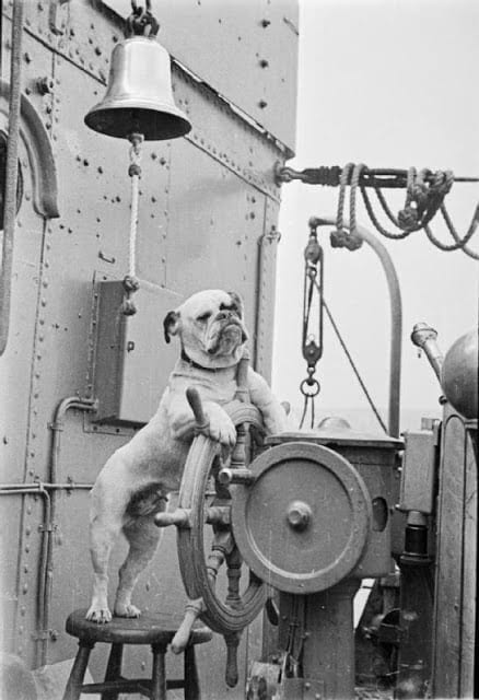 Venus, the bulldog at the wheel of HMS VANSITTART