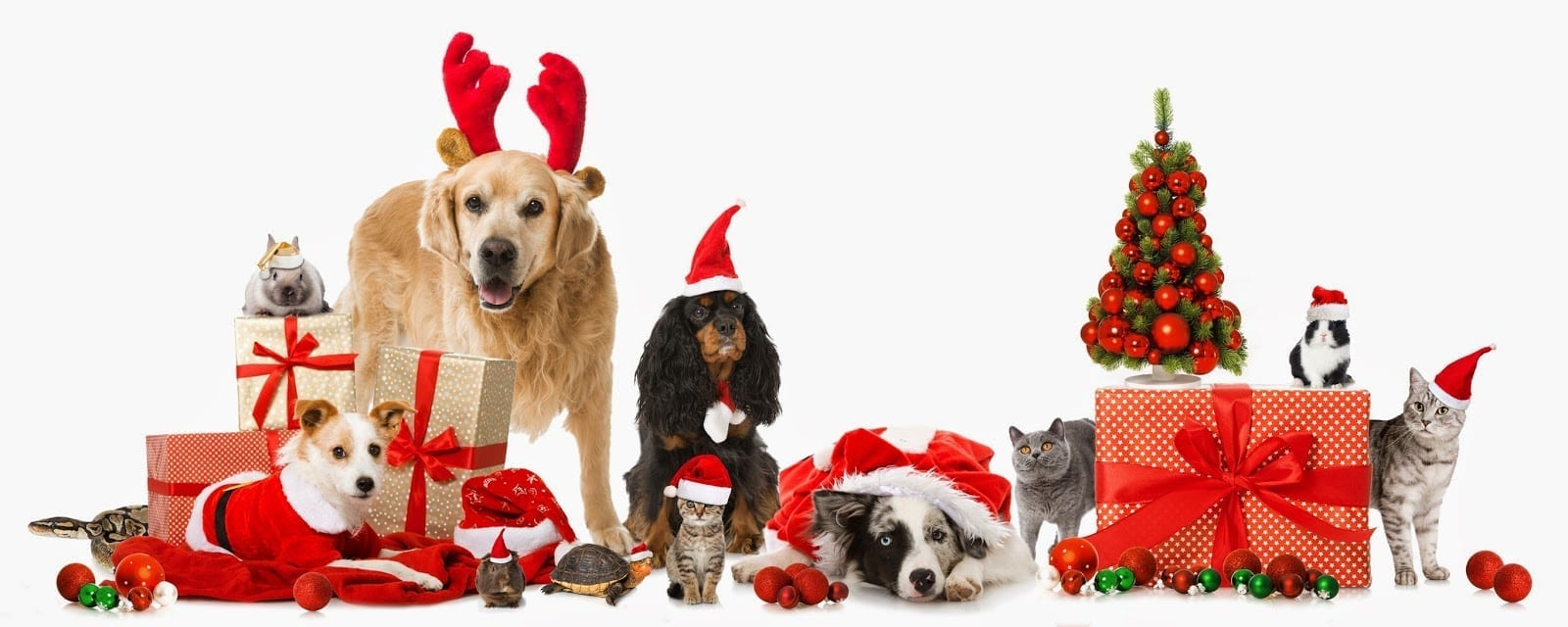 Image result for pets and christmas