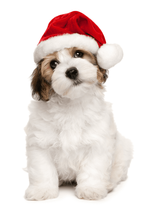 Electronic Dog Christmas Cards